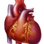 Признаки, симптомы и лечение правожелудочковой сердечной недостаточности
