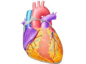 Лечение сердечной недостаточности народными средствами