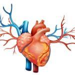 Признаки скрытой сердечной недостаточности