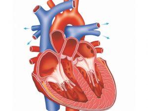 Скрытая сердечная недостаточность