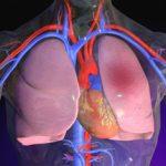 Причины появления жидкости в легких при сердечной недостаточности