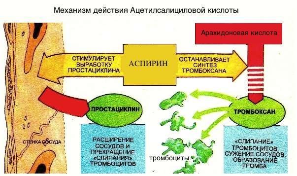 механизм действия аспирина на сосудистую стенку