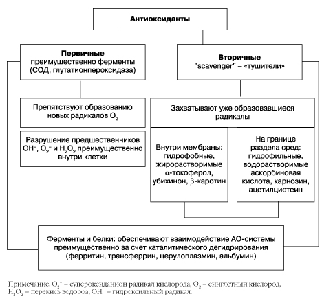 антиоксиданты при атеросклерозе сосудов головного мозг