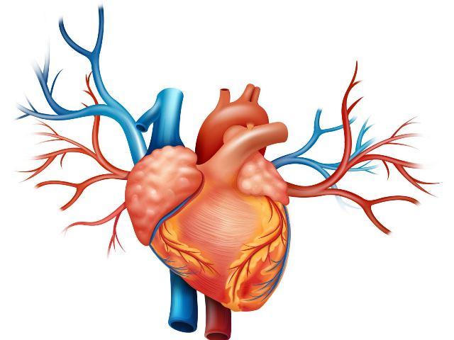 Симптомы и лечение хронической сердечной недостаточности