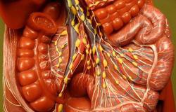 вены и артерии кишечника