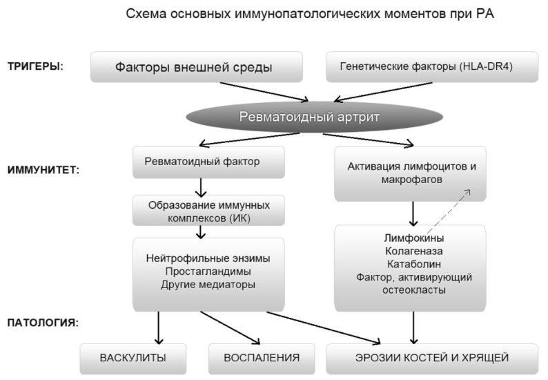 схема патогенеза РА