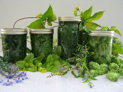 лечение варикоза травами