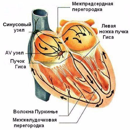 слабость синусового узла