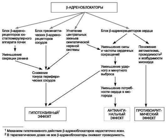 как работает в организме анаприлин