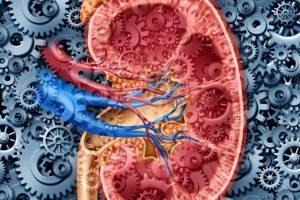 медикаментозное и оперативное лечение пчечной гипертонии