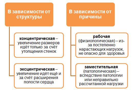 классификация гипертрофии миокарда