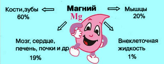 где содержится магний в организме