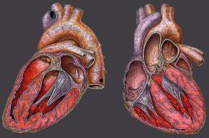 лечение и симптомы рестриктивной кардиомиопатии