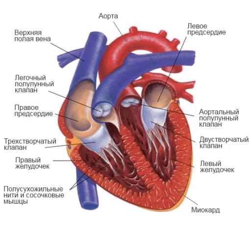 Сочетанный порок сердца: митральный, аортанный, комбинированный, с ...