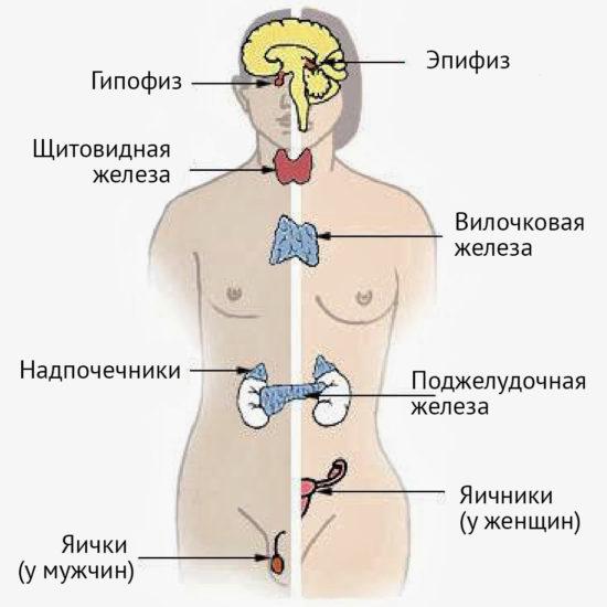 причины дисгормональной кардиомиопатии