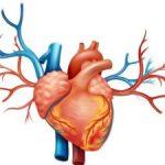причины и симптомы ХСН