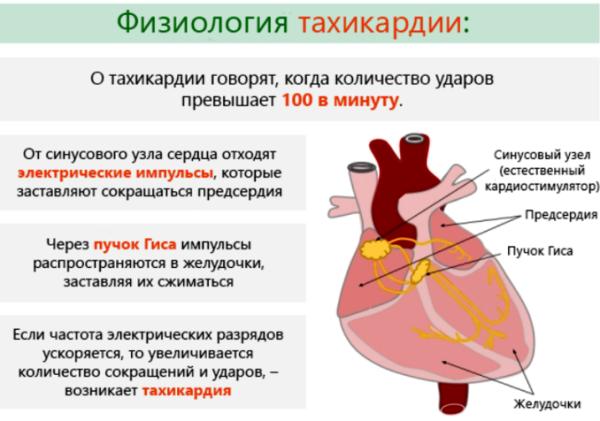 Тахикардия - одно из показания к применению препарата Амиодарон