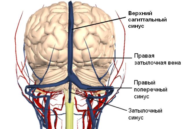 Что такое сагиттальный синус
