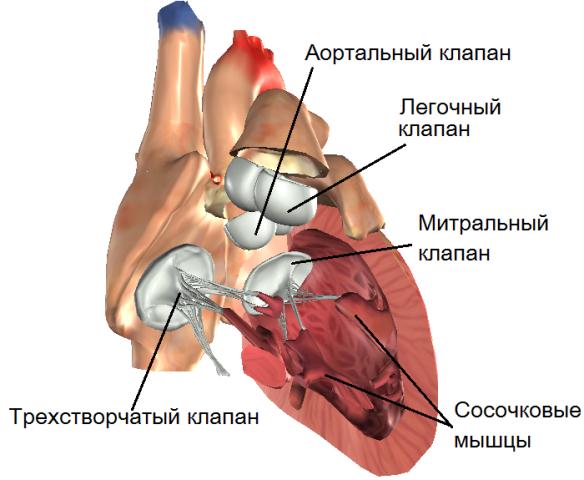 Поражение клапанов сердца