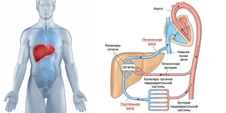 Что такое портальная гипертензия