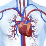 Профилактика инфаркта миокарда