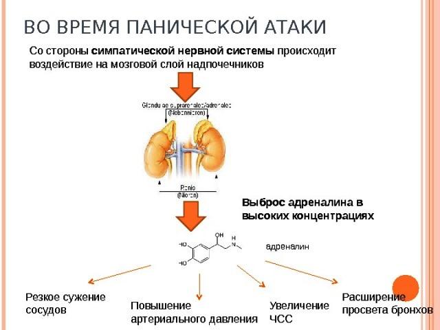 Что происходит в организме при панических атаках