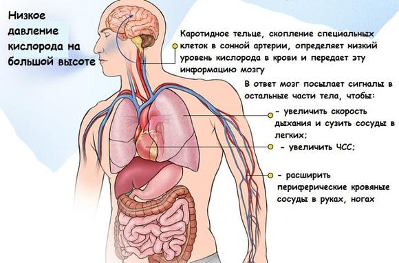 гипоксия головного мозга