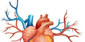 Электрическая ось сердца