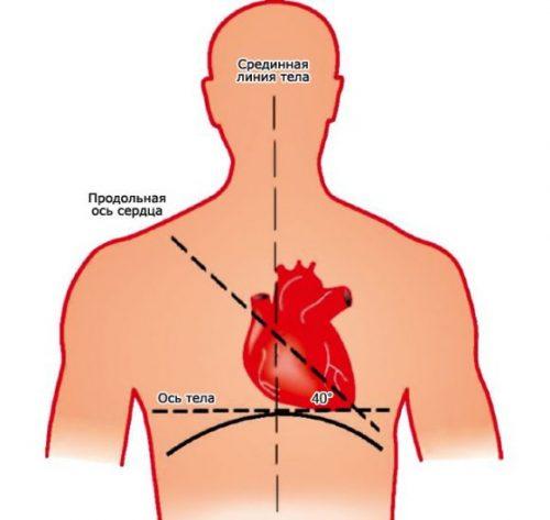 Сердце расположено по центру грудной клетки