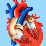Митральный порок сердца
