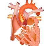 Рестриктивная кардиомиопатия