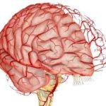 Церебральный атеросклероз головного мозга