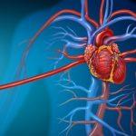 Что такое сердечно-сосудистый риск