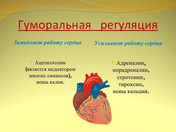 гормональная регуляция