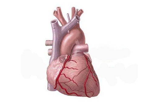 гормоны сердца
