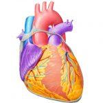 сердечная недостаточность и лечение народными методами