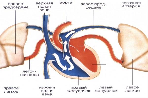 кровоток ПП перегрузка