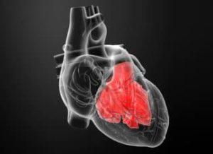 трехпредсердное сердце