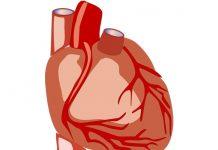 утолщение стенок аорты сердца