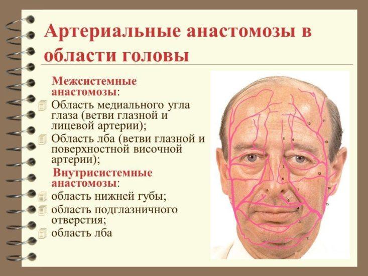 анастамозы области головы