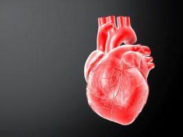 Симпатическая система сердца
