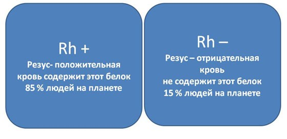 резус фактор-1