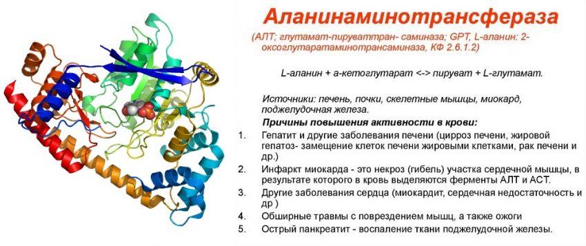 Аланиновая аминотрансфераза