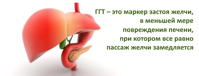 Гамма глютаминовая трансфераза