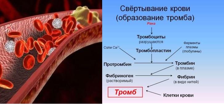 Гемокоагуляция