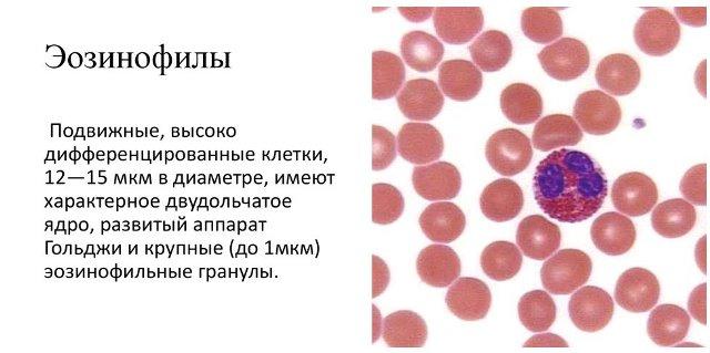 Эозонофилы