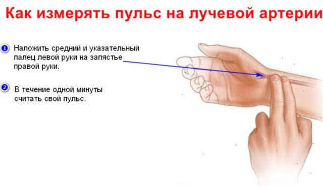 Как измерять пульс правильно