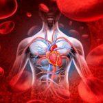 Коронарное кровообращение
