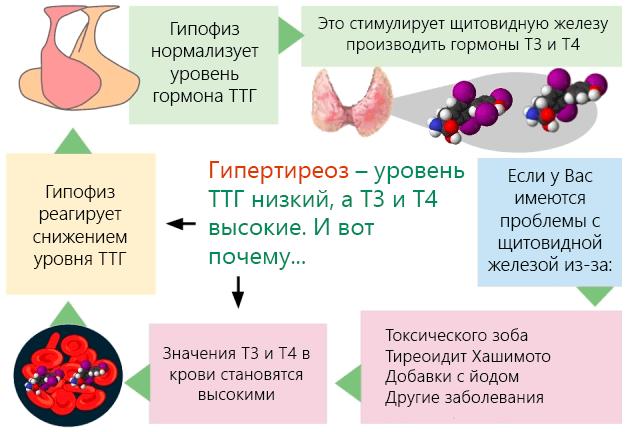 Низкий ТТГ