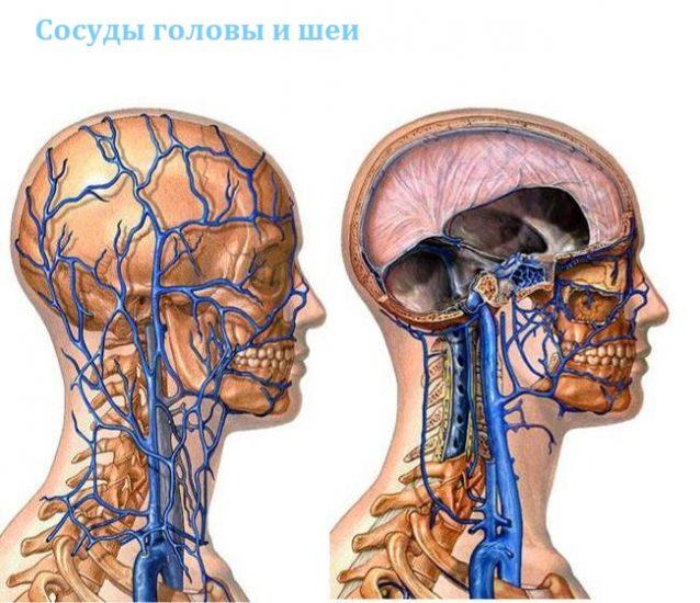 Сосуды головы и шеи
